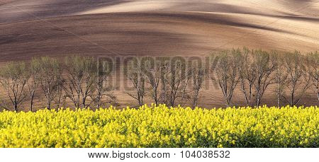 Sunny hills with trees and rapeseed flowers