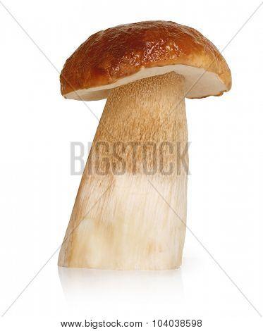 Boletus Edulis mushroom isolated on white background.