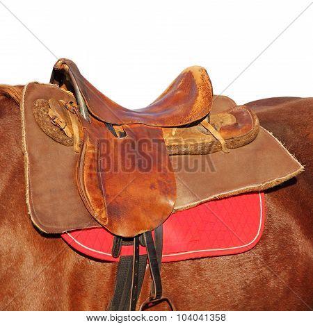 Ridding Saddle On A Brown Horse Taken Closeup.