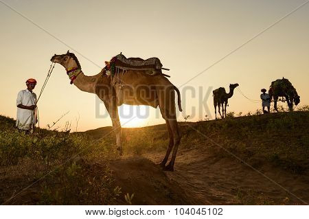 Pushkar, India - November 05, 2014 : Unidentified Camel Trader Crossing The Sand Dune During Sunset