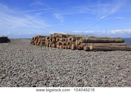 A Woodpile On A Beach