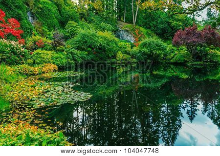 Delightful landscaped and floral park Butchart Gardens on Vancouver Island. In a small pond, overgrown with lilies, reflected sky