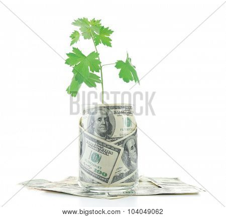 Money in glass jar with plant isolated on white