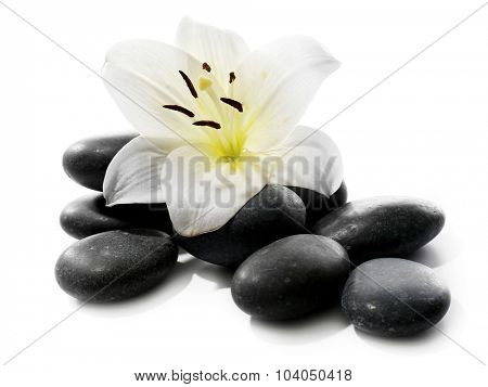 Lily and spa stones isolated on white