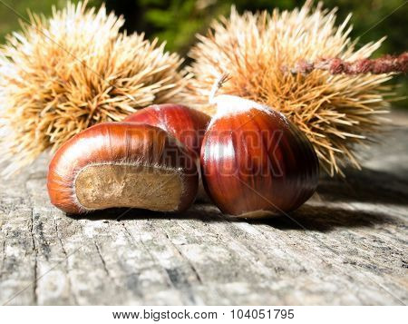 Chestnuts In Autumn