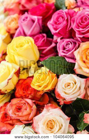 nice roses