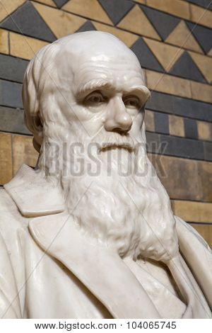 Charles Darwin In The Natural History Museum In London