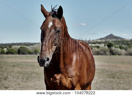 Horse in wilderness