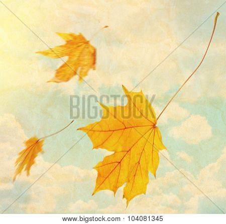 Beautiful autumn leaves flying on a wind