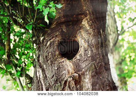 Tree hollow in heart shape close-up