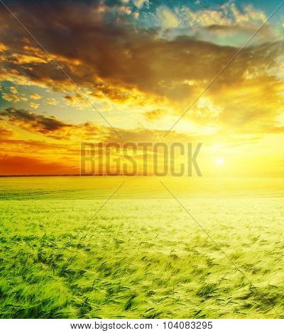 amazing sunset over green field