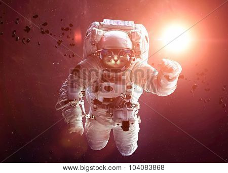 Beautiful cat in outer space. Elements of this image furnished b