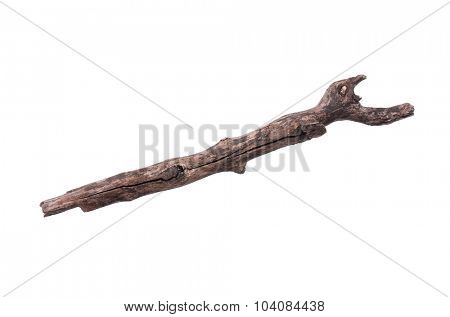 Single dry tree branch - isolated on white background