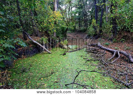 Autumn scene on bog in forest