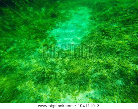 Seaweeds In A Sardinian Sea Floor