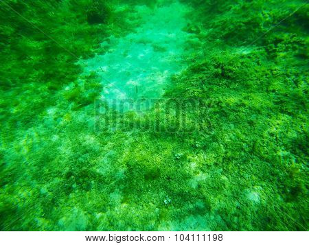 Underwater View Of A Sardinian Sea Floor
