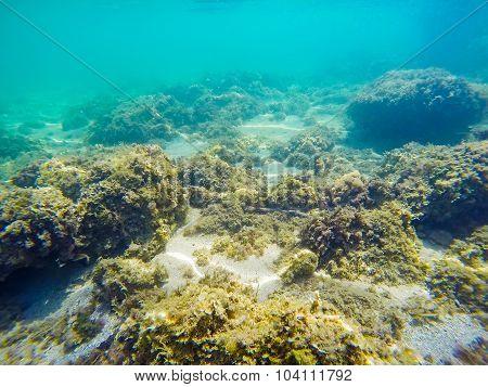 Rocks And Seaweeds On The Sea Floor In Sardinia