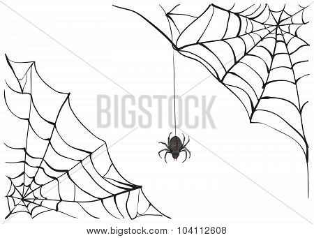 Spiderweb. Big black spider web. Black scary spider of web. Poison spider