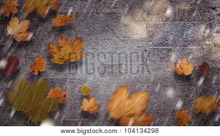 Autumn leaves against grey