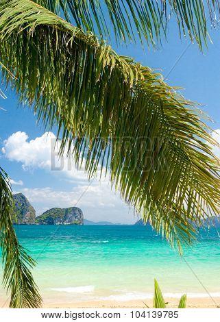 Jungle and Sea Exotic Paradise