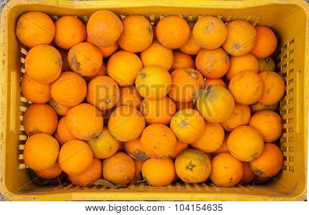 Freshly harvested greek oranges in plastic container for sale at farmer's market