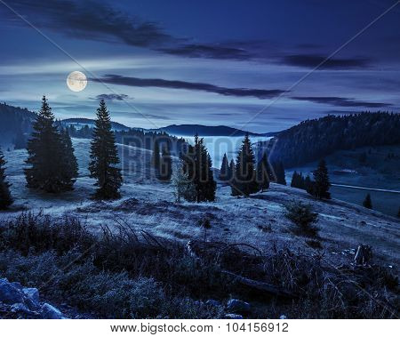 Coniferous Forest On A Hillside In Foggy Mountains At Night