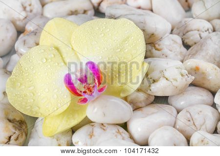 Yellow orchid on wet pebbles background.