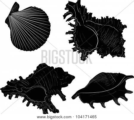illustration with four black shellfishes sketches isolated on white background
