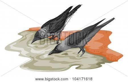 Vector illustration of crow drinking water.
