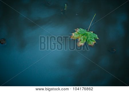 One Autumn Maple Leaf Floating On Water