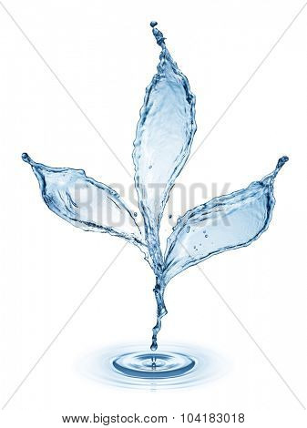 Leaf made of water splash isolated on the white background