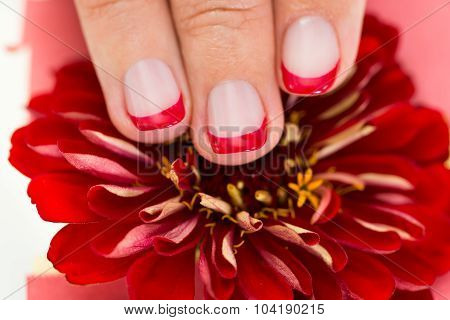 Female Hands With Manicure Nail Holding Gerbera