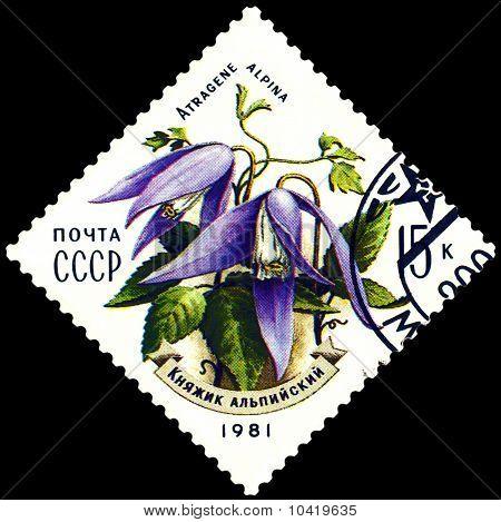 Vintage  Postage Stamp. Atragene Alpina.