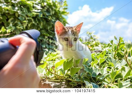 Photographing a little kitten