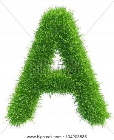 Vector capital letter A from grass on white background