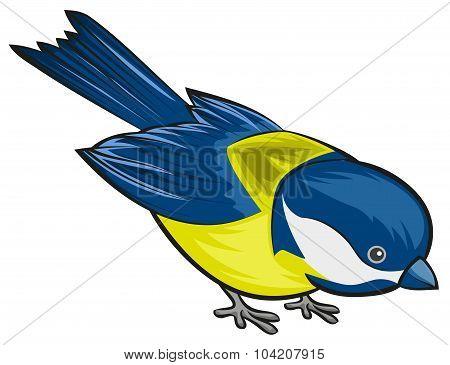 Bird titmouse. Tit