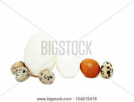 different size eggs domestic poultry