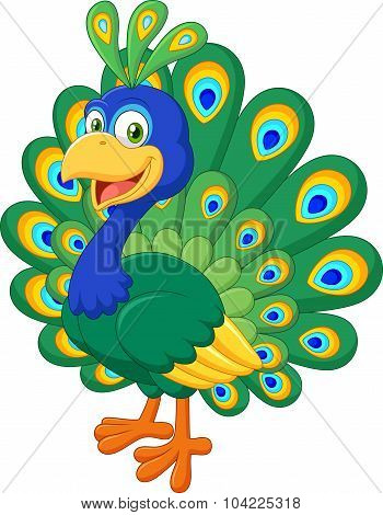 Cartoon beautiful peacock isolated on white background