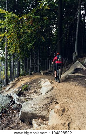 Mountain Biker Riding Cycling In Autumn Forest