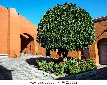Green tree of Santa Catalina Monastery in Arequipa
