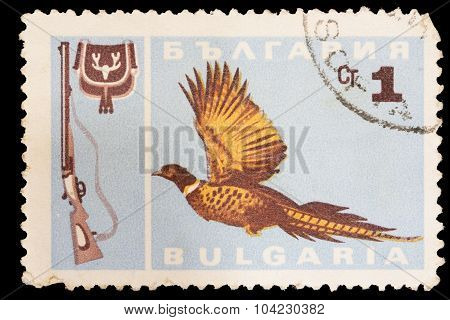 Postage Stamp Printed In Bulgaria Showing A Common Pheasant, Phasianus Colchicus, And A Shotgun