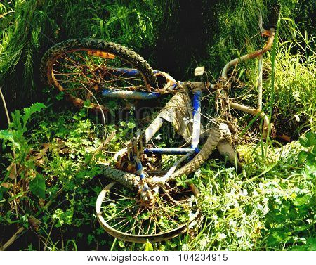 Old rusted bike dumped in bushes