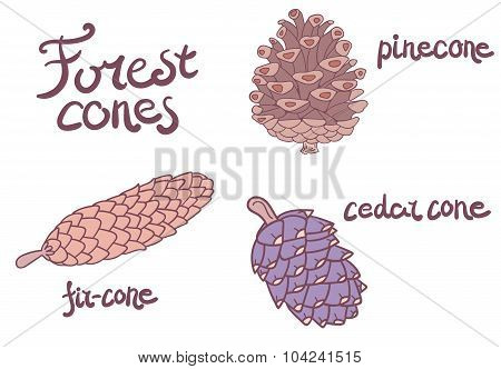 Forest conifer cones set