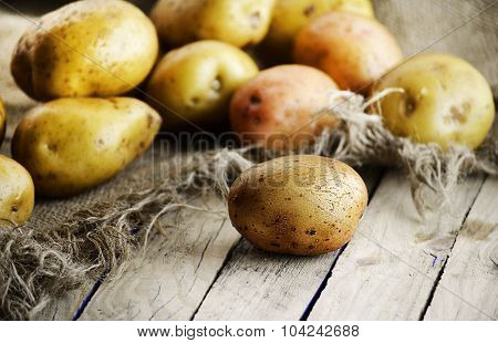 the harvest of potatoes
