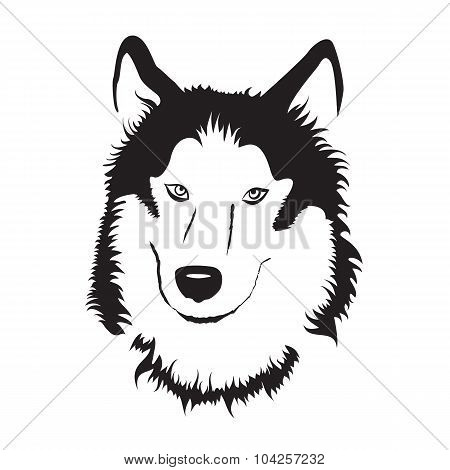 Siberian Husky. Stock Vector Illustration.