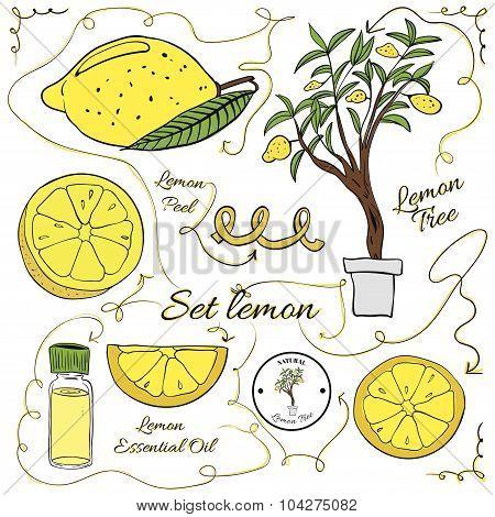 A Large Set Of Isolated Colorful Lemon Elements For Design On White Background. Illustration
