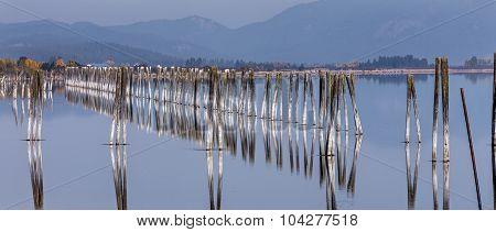 Panorama Of Pilings In River.