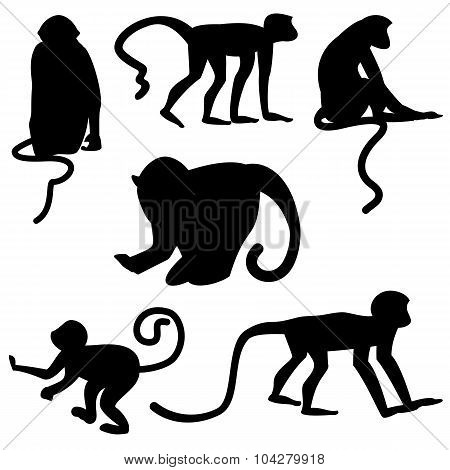 Black Silhouettes Of Monkeys On White Background