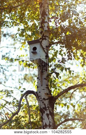 Birfhouse On The Birch