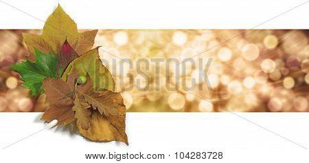 Autumn Leaf Bokeh Website Banner